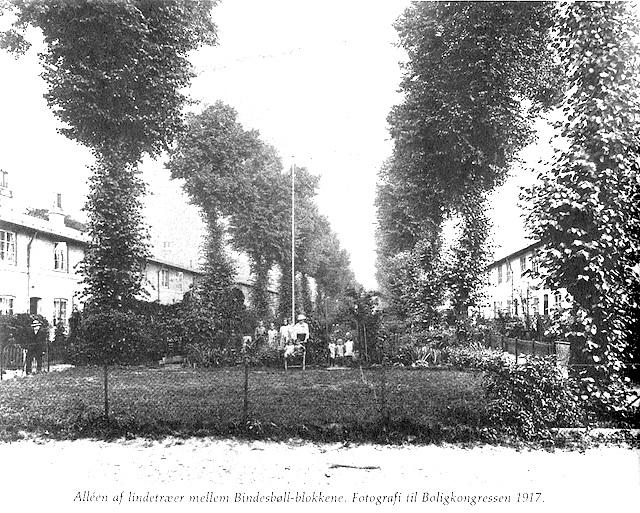 lindetraeerne 1917